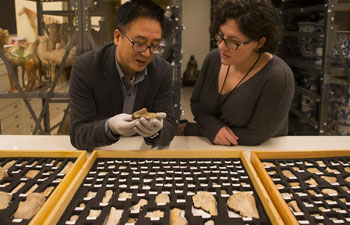 Chinese oracle bone scripts on display in Toronto museum