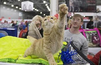 Annual cat show held in Moscow, Russia