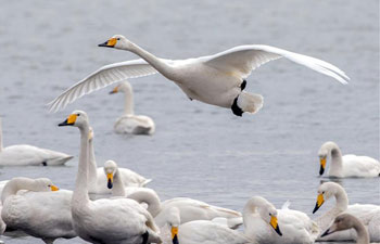 Migratory birds seen in east China's Jiangsu