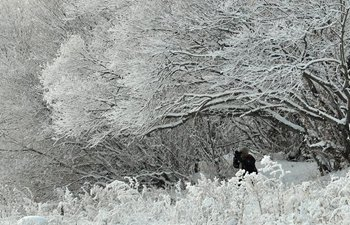 Cold fronts bring snowfall in N China