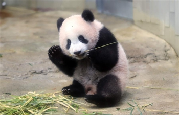 Panda cub Xiang Xiang to make public debut at Tokyo zoo