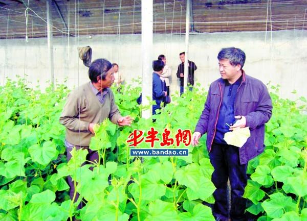 青岛本土蔬菜种植洋种子 国产品种推广成难题