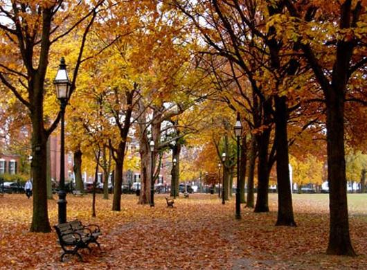 如何拍摄美丽的秋日景色 - 暮雨晨听 - 暮雨晨听