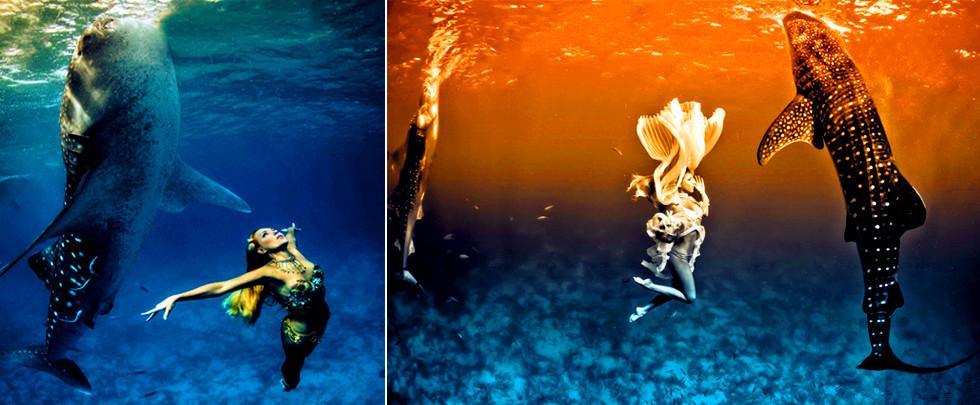 海底的視覺盛宴:美女與鯨鯊同遊(組圖)