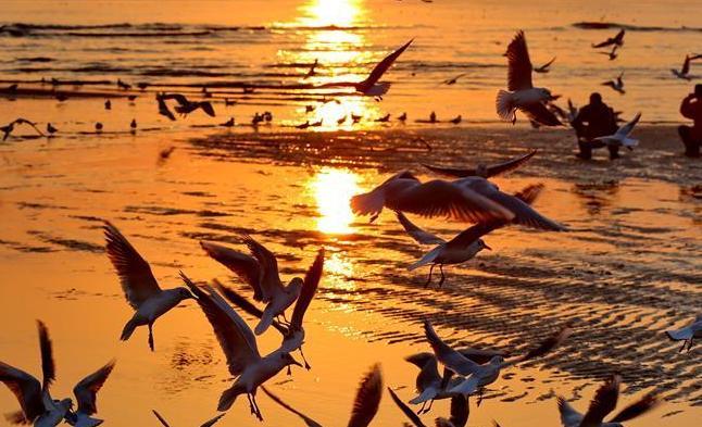 北戴河初春觀鷗舞
