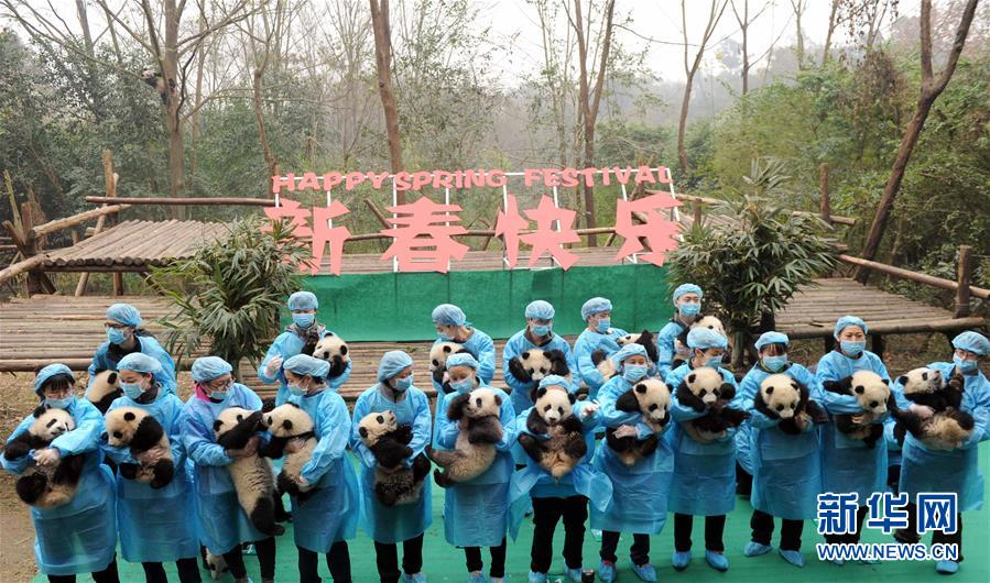 23 panda cubs send chinese new year greetings in sw china xinhua englishnewscn