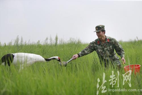 江苏盐城边防:退伍老兵手绘地图助力湿地守护