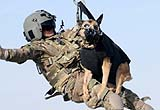 美軍軍犬待遇高:穿鞋戴墨鏡著戰術背心