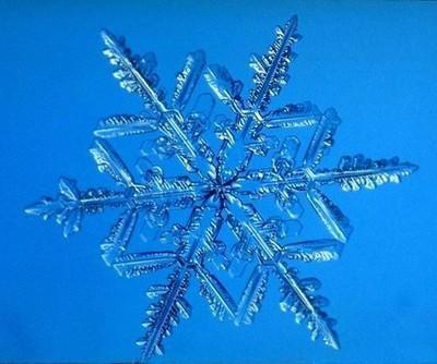真的好美!据说是放大一万倍的雪片[组图]