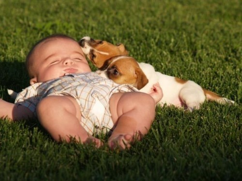 太有爱了!另类小保姆照顾宝宝