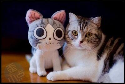 猫咪搞笑 - 庄文飞律师 - 庄文飞律师博客