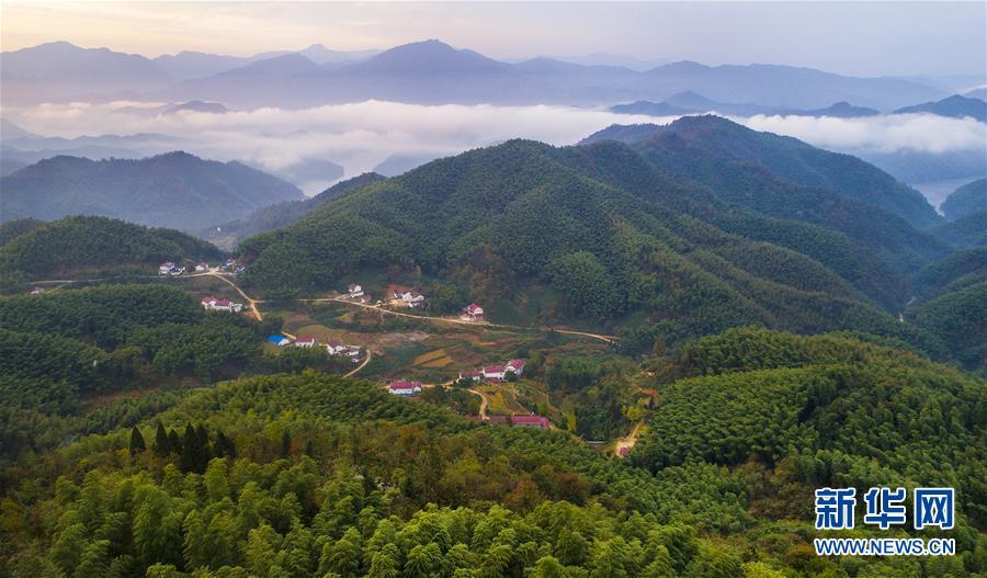 (美丽中国)(3)大别山的竹海与云海