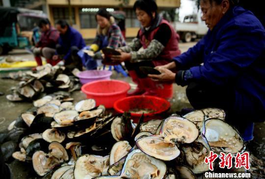 江西万年:珍珠产业帮农民走上致富路