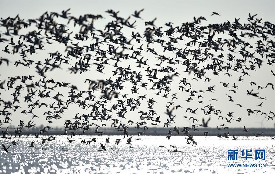 (环境)(1)天津北大港湿地迎来大批迁徙候鸟
