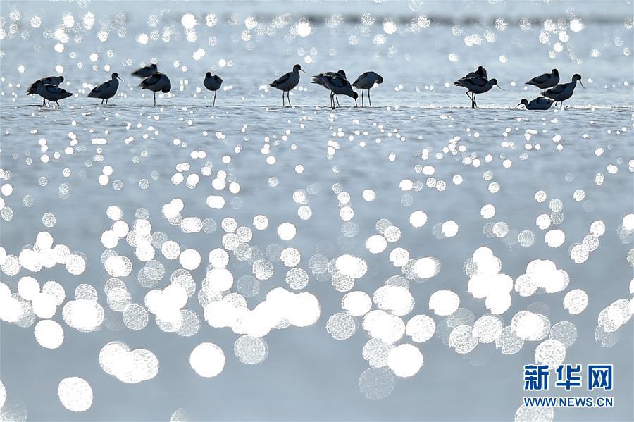 (环境)(2)天津北大港湿地迎来大批迁徙候鸟