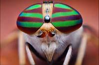 一組精彩至極的昆蟲作品