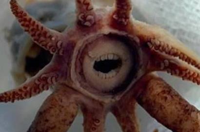 揭秘十种长怪牙动物:深海鱿鱼牙齿似人类