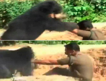 組圖:印度兩警衛救援落井棕熊反遭其襲擊