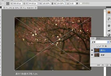 前期or後期?探討如何提升生態攝影的表現力