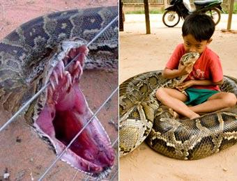 盤點世界各地駭人大蟒蛇 16.7米大蛇精成榜首