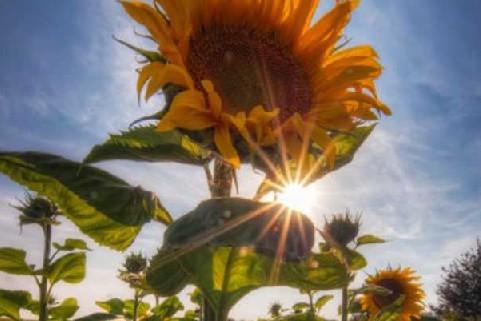 如何拍攝太陽光芒