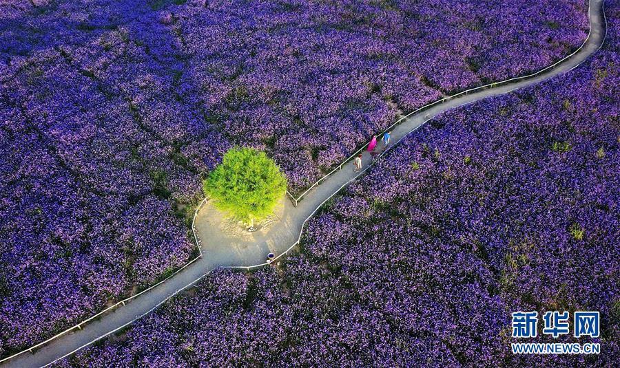 (十九大·读报告 话民生)(7)加快生态文明体制改革,建设美丽中国