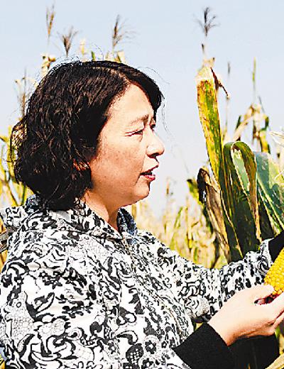 梅园雪在高产项目区查看玉米结穗情况。