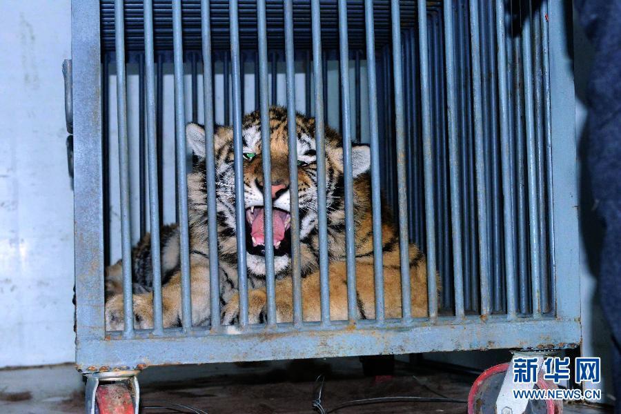 运抵野生动物救助站