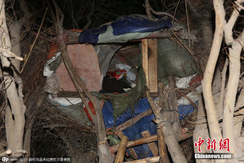造车榕之子- 6月15日消息,福建晋江一棵榕树上,一男孩搭建起了一间树屋.白天