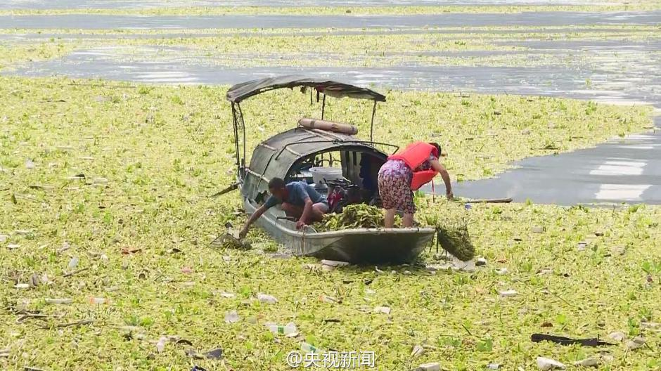 长江重庆段现近万平方米漂浮垃圾带