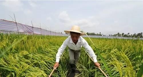 """""""十三五""""规划纲要告诉你 干农业要盯紧这些致富商机"""