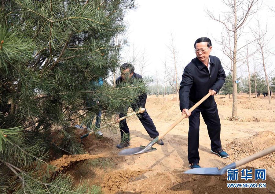 (XHDW)(6)党和国家领导人参加首都义务植树活动