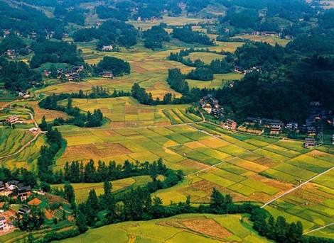 中国将开展农业农村大数据试点