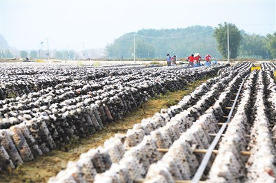 """农民""""入股""""享红利 让脱贫群众获得感更强"""
