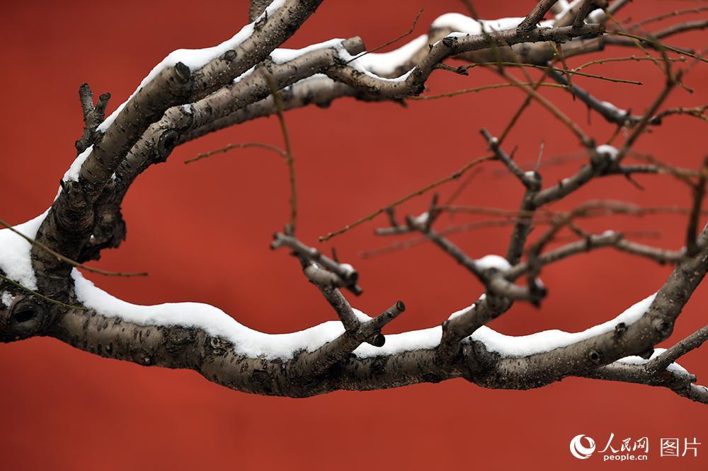 人民網記者帶您故宮賞雪 威嚴靜謐的唯美畫卷【3】