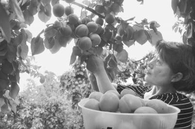 东海县引现任上海市委书记进多品种果树扶贫