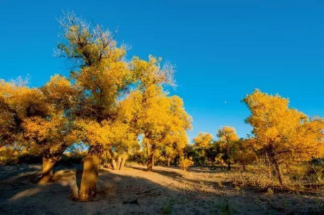 �t望   回访内蒙古阿拉善盟:沙尘源头在做什么?