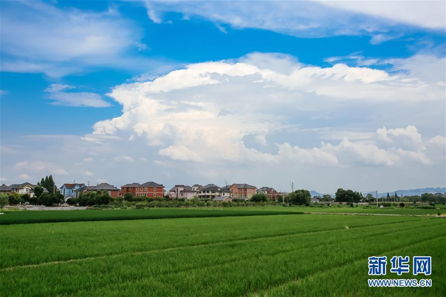 (砥砺奋进的五年・绿色发展 绿色生活)(3)浙江余杭永安村:保护基本农田,助力绿色发展