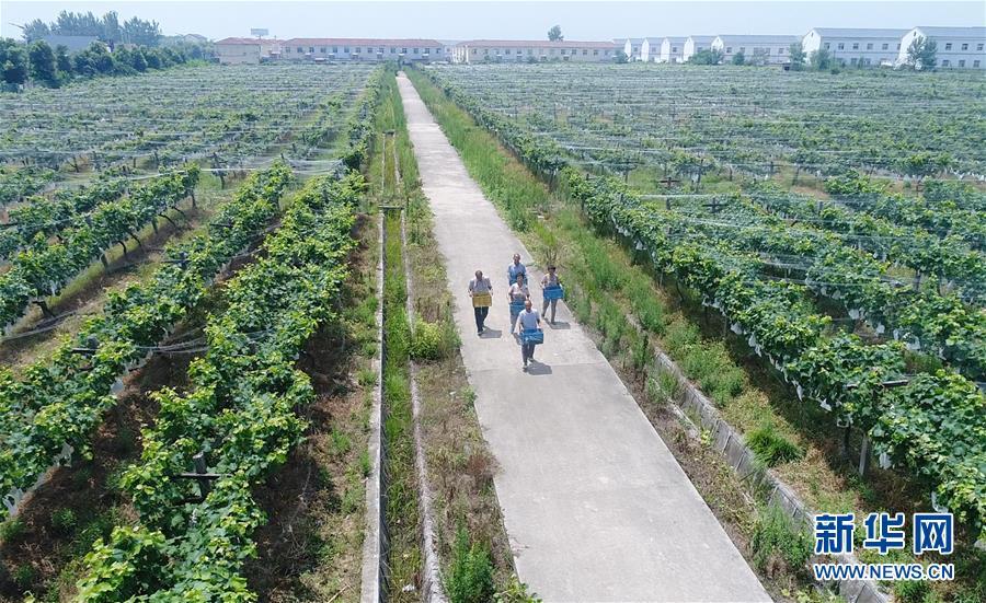 (新华全媒头条·图文互动)(7)中国反贫困斗争的伟大决战