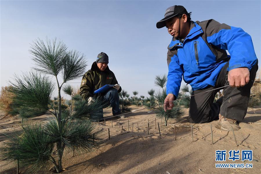 (新华全媒头条·图文互动)(16)携手防治荒漠 共谋人类福祉——《联合国防治荒漠化公约》第13次缔约方大会见证中国破解世界治沙难题