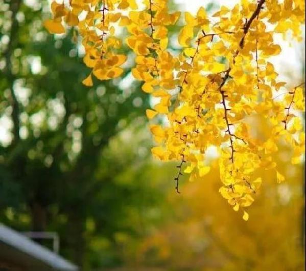 秋分--昼夜均而寒暑平 - 教育者周卓民 - 教育者周卓民