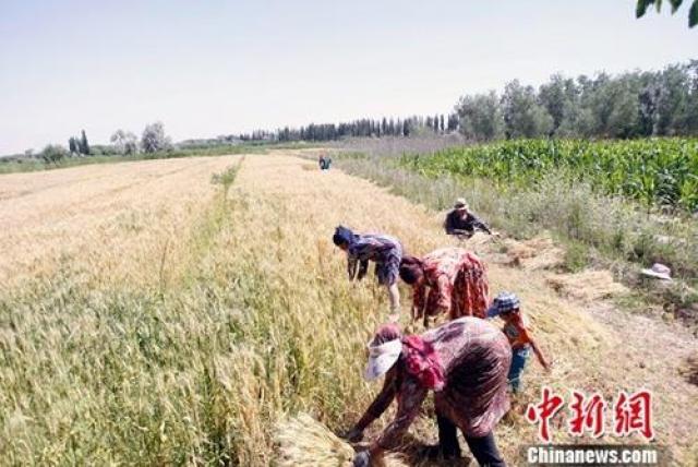 农业部预计2017年中国粮食产量1.2万亿斤以上