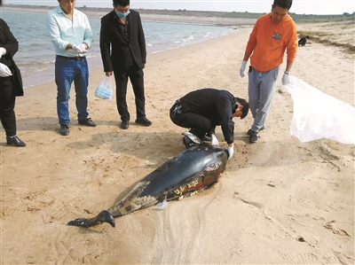 长江江豚科考时隔5年再次启动 今年发现21头江豚死亡
