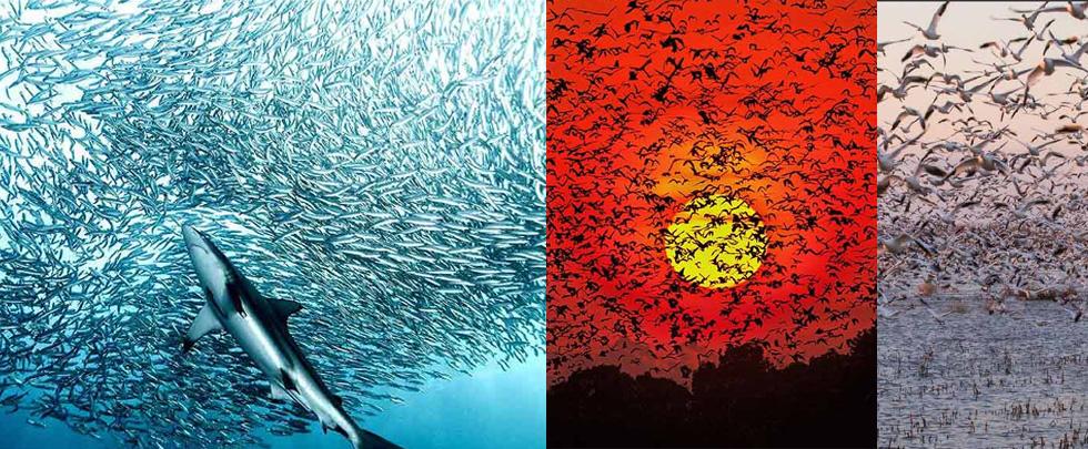 十張震撼的動物集合照 驚嘆大自然壯觀(組圖)