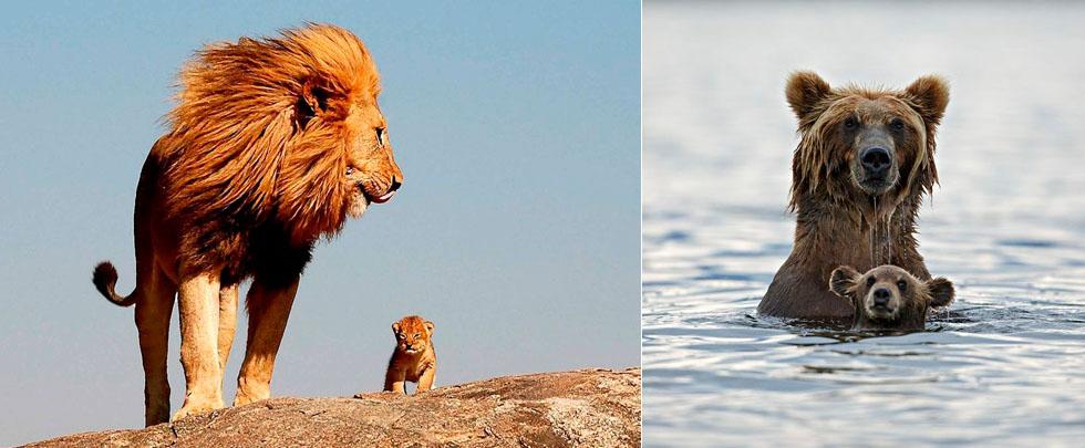 """动物世界温馨""""母子照""""(组图)"""