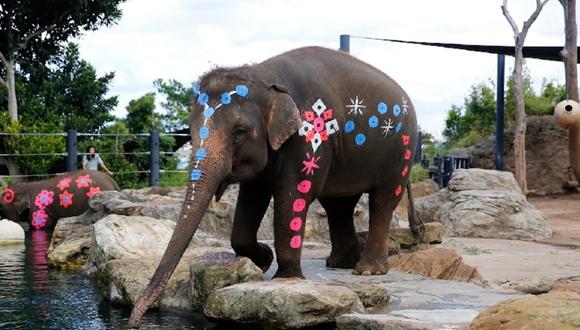 悉尼塔朗加动物园装扮大象庆祝泰国宋干节