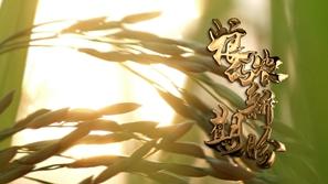 习近平的小康故事|粮农的新期盼