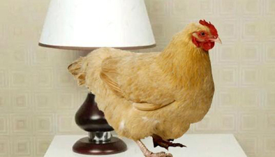 夏天放只雞在床頭可驅蚊?