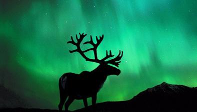 追尋北極光 芬蘭上演壯觀極光秀