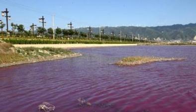 山西運城:多彩鹽湖水 原是鹽藻和鹵蟲所致